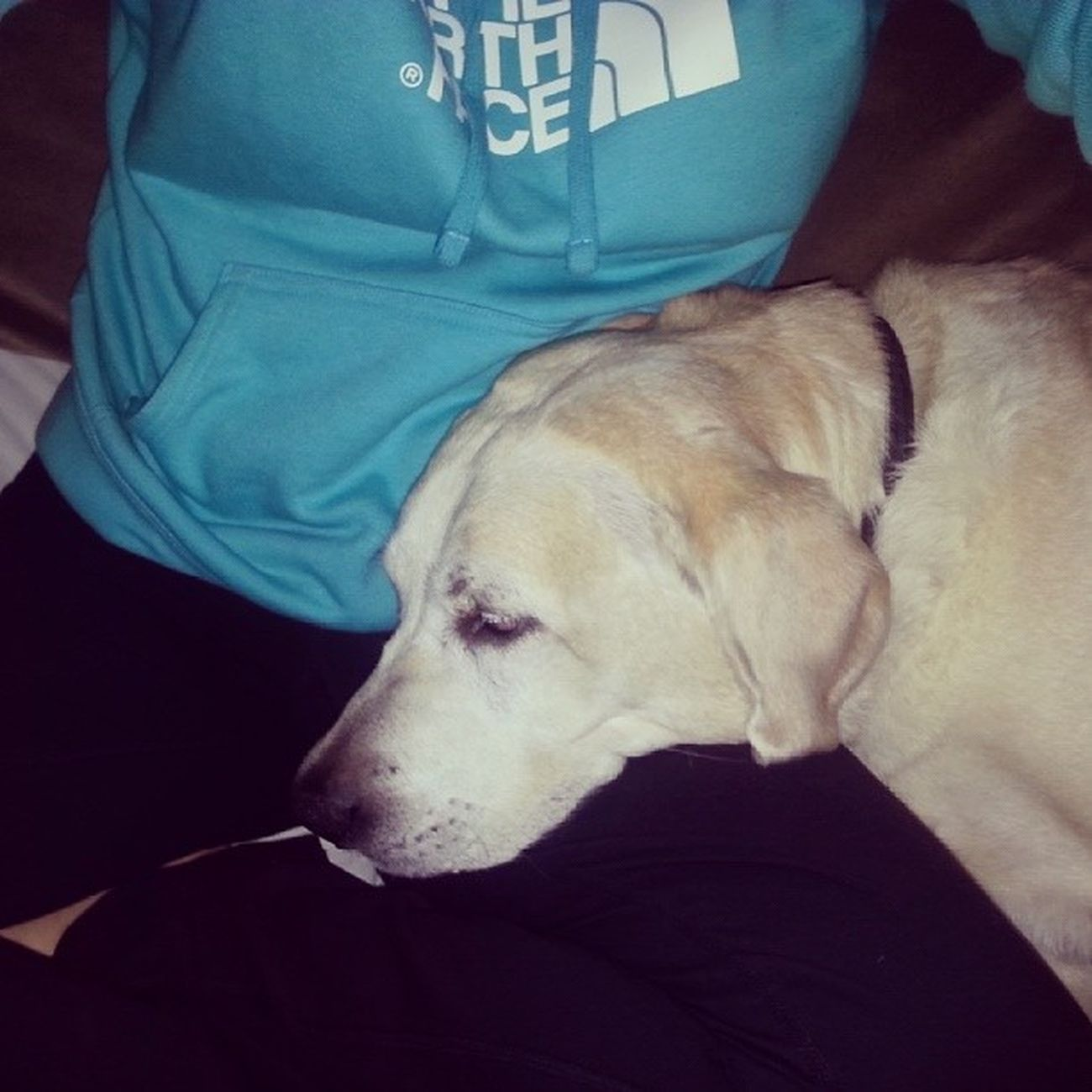Lovethisdog MAXI Loveher Bestdogever cuddles specialtimes snoring cute shelovesme