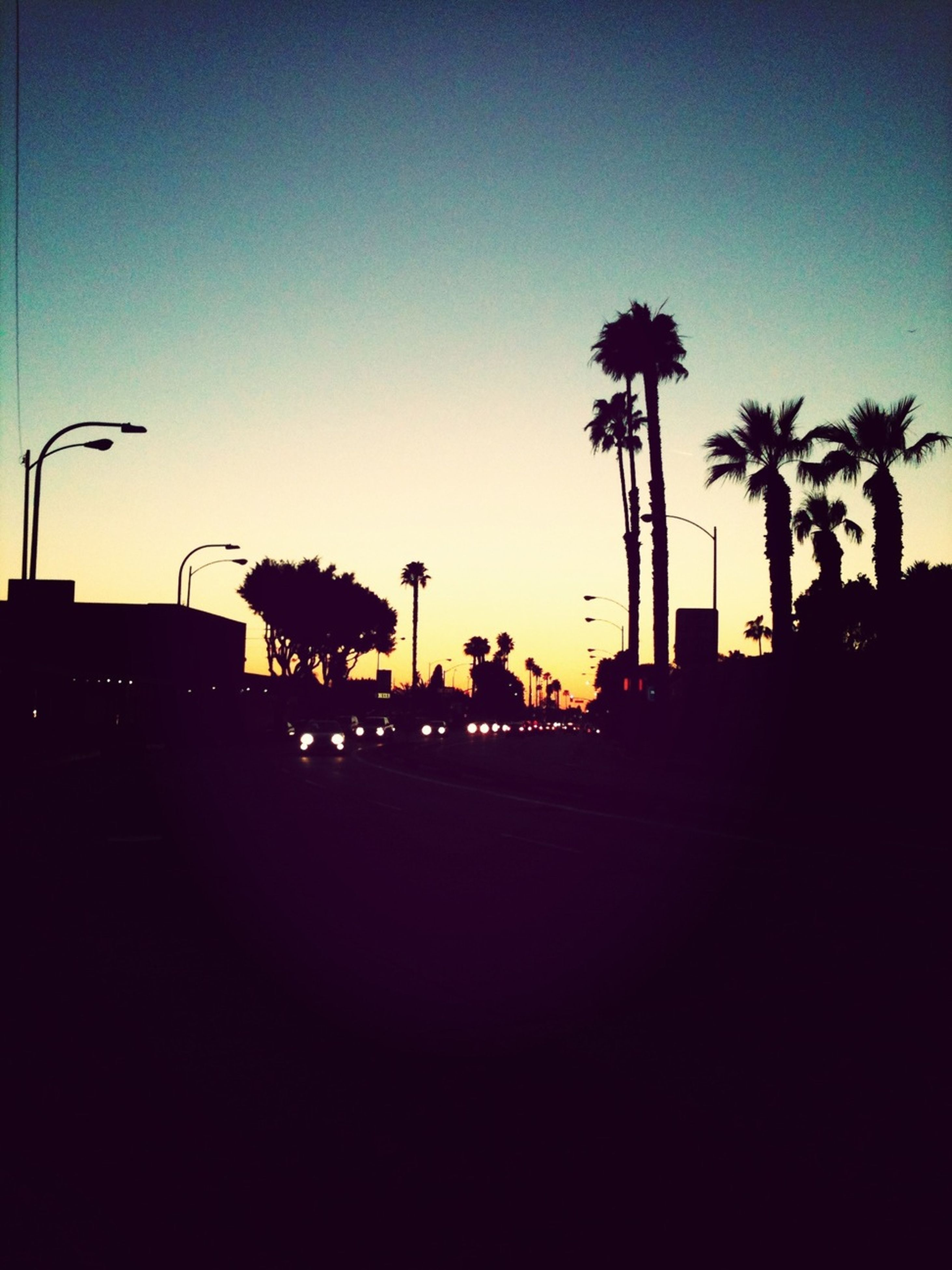 silhouette, palm tree, tree, clear sky, sunset, copy space, street light, built structure, building exterior, blue, sky, dark, dusk, low angle view, outline, architecture, growth, illuminated, road, outdoors