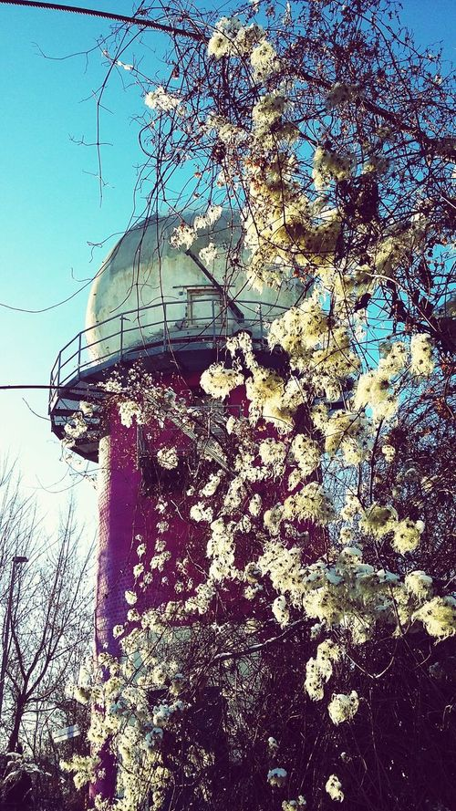TBT  Berlin Teufelsberg Abandoned Places Winter Trees