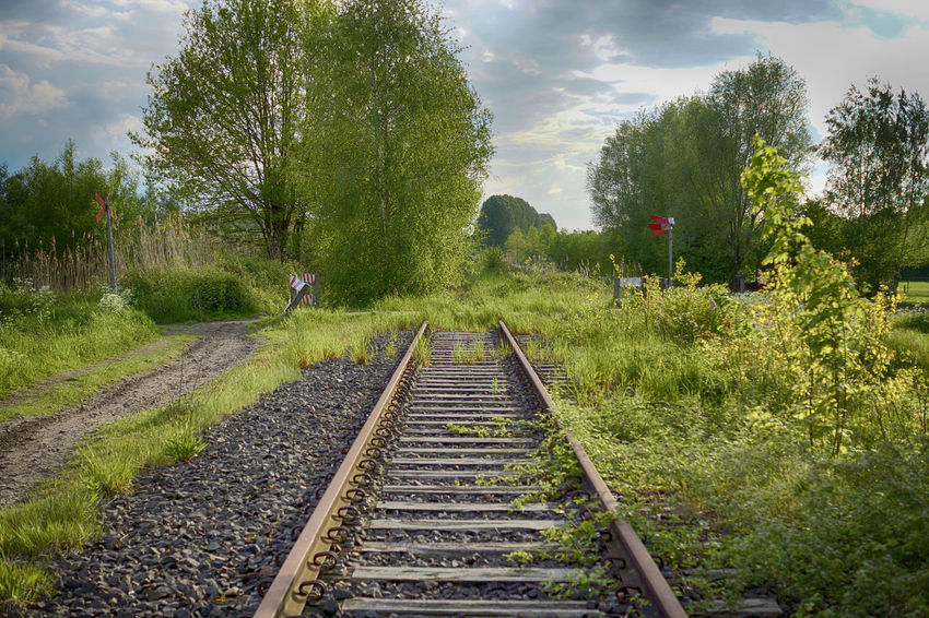 Dead train tracks in a spring landscape Arboles Bomen Dead Dead Track Dood Spoor Landscape Outdoor Outdoor Photography Outdoors Outdoors Photograpghy  Plants Rails Spoor Spoorweg Spring Springtime Stuck Stuck In Time Track Tracks Train Tracks Transportation Trees Tresspassing árbol