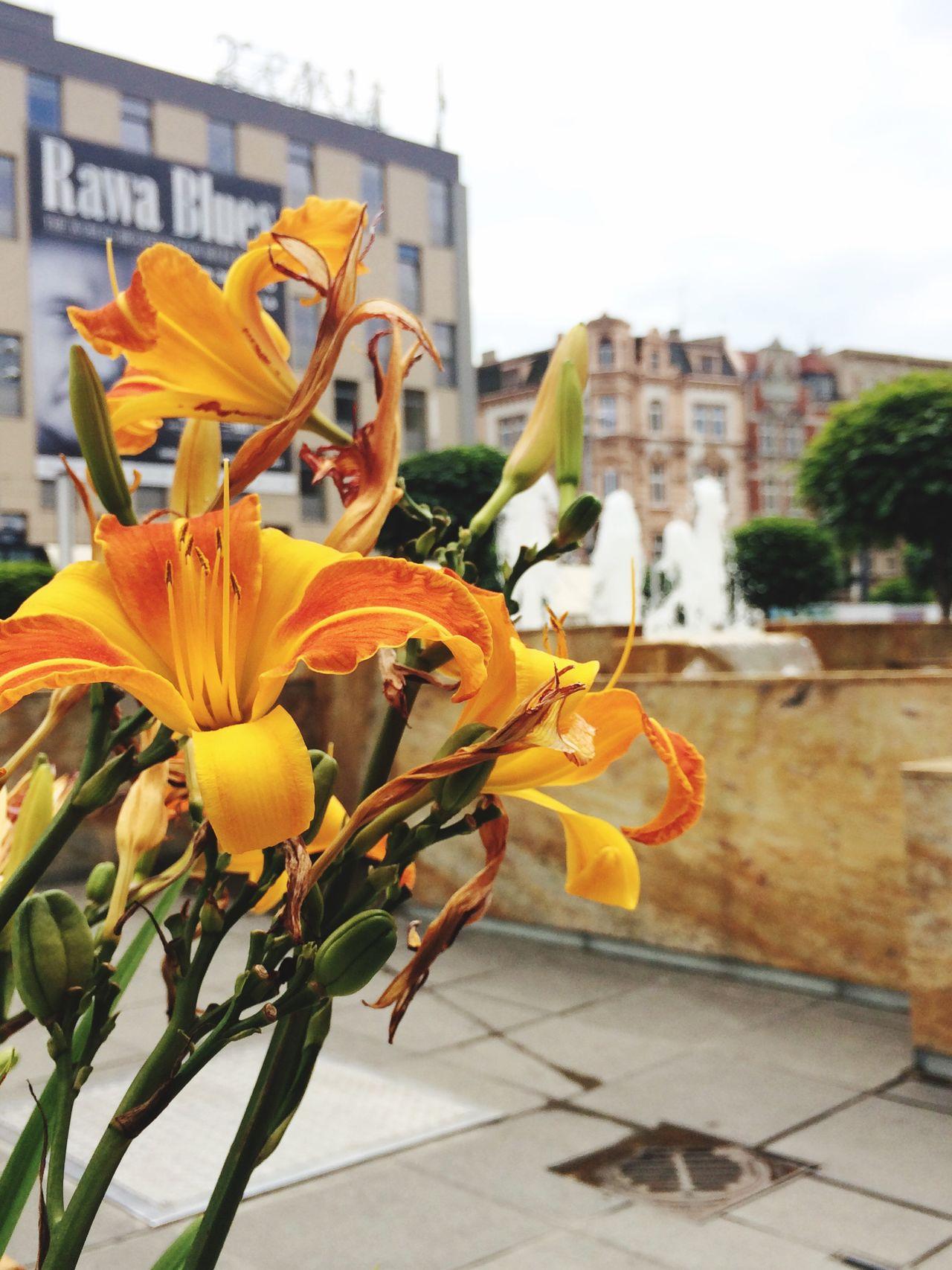 Katowice Kwiaty Flowers Fontanna Enjoying Life Rynek Śląsk