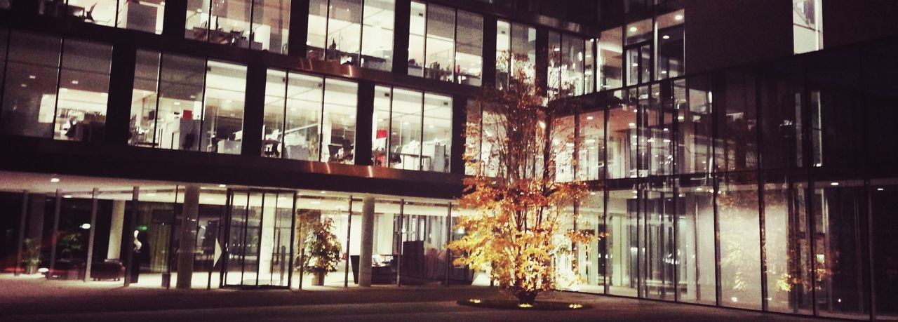 architecture, window, no people, illuminated, built structure, building exterior, night, indoors, tree, city