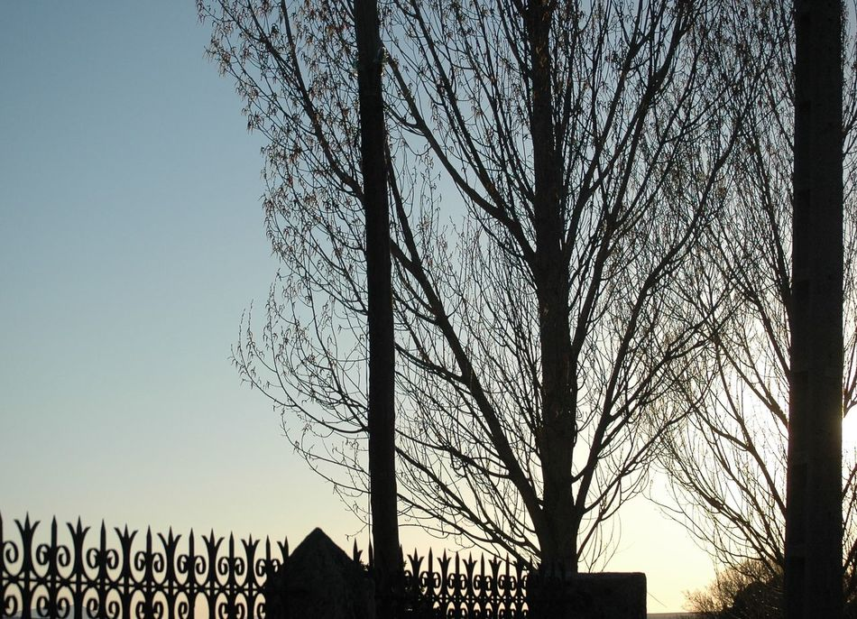 Iron Gate Light And Shadow Poplars Tree Branches Trees Winter Winter Trees