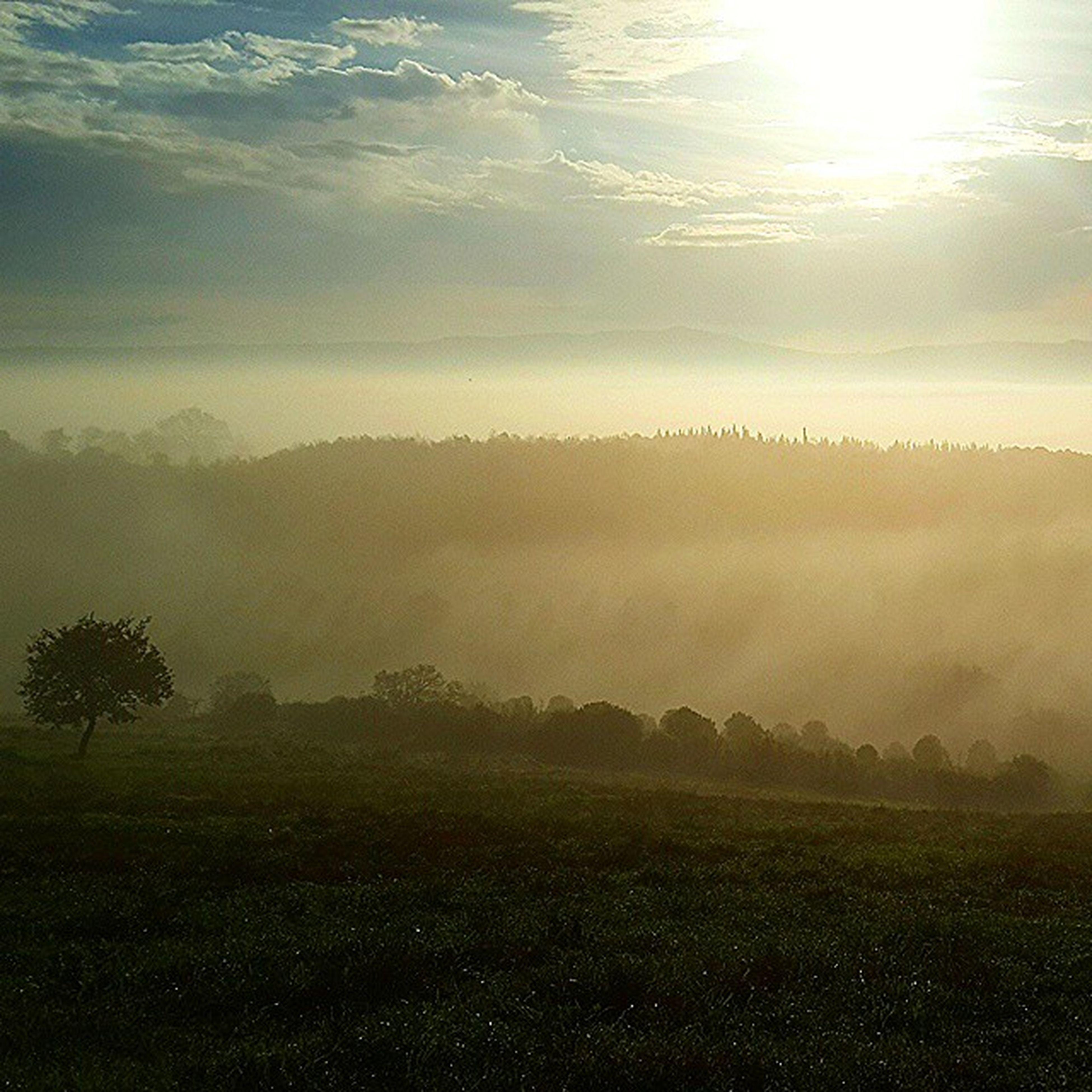sun, tranquil scene, tranquility, scenics, sunbeam, beauty in nature, sunlight, landscape, nature, lens flare, sky, idyllic, grass, sunset, water, non-urban scene, field, tree, outdoors, remote