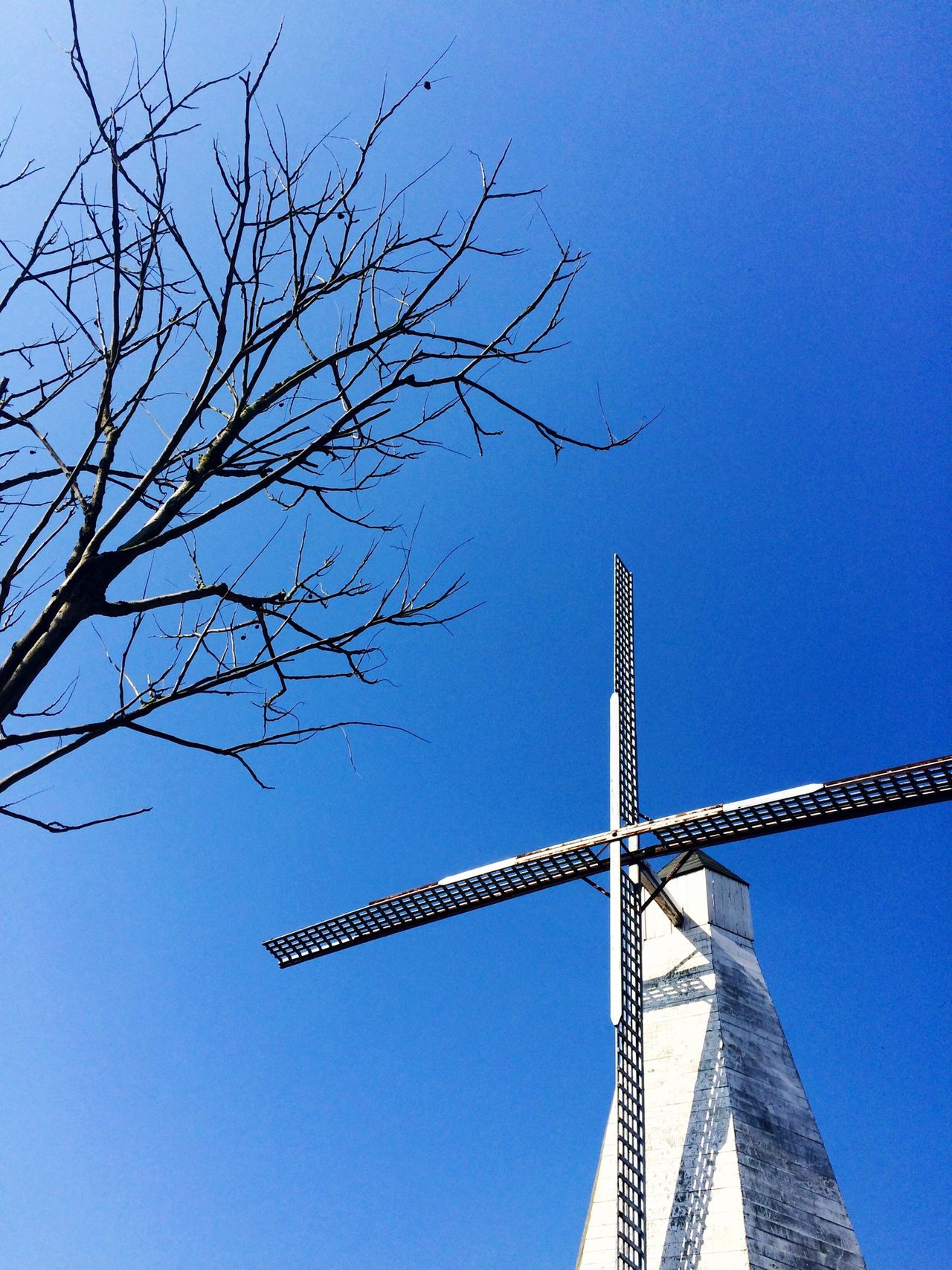 Windmill Sky China Tree Relaxing Enjoying Life Hanging Out Hello World Sunny Day Park