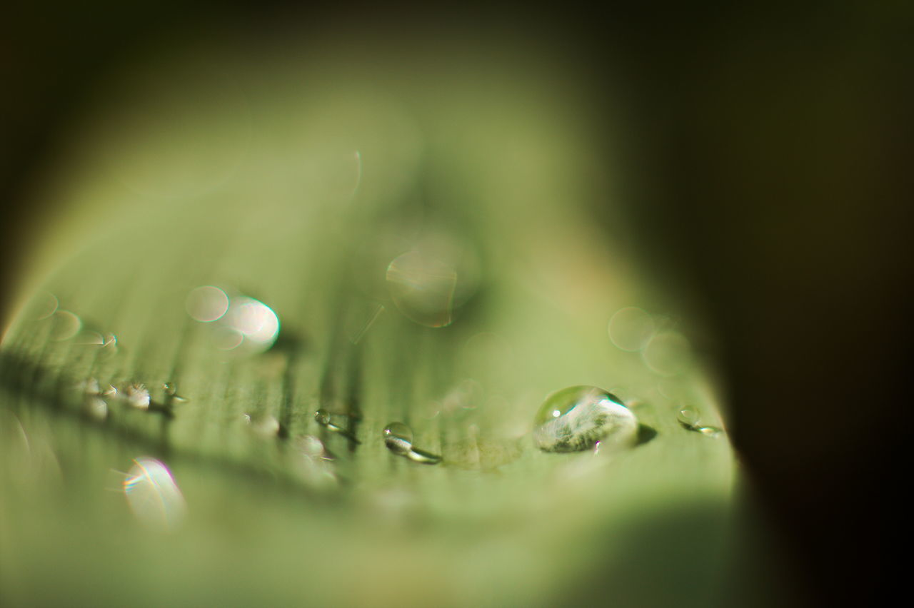 drop, water, wet, nature, fragility, freshness, selective focus, close-up, beauty in nature, green color, raindrop, no people, outdoors, day, purity, growth, grass
