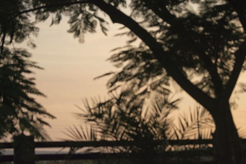 Blurred vision First Eyem Photo Sunset