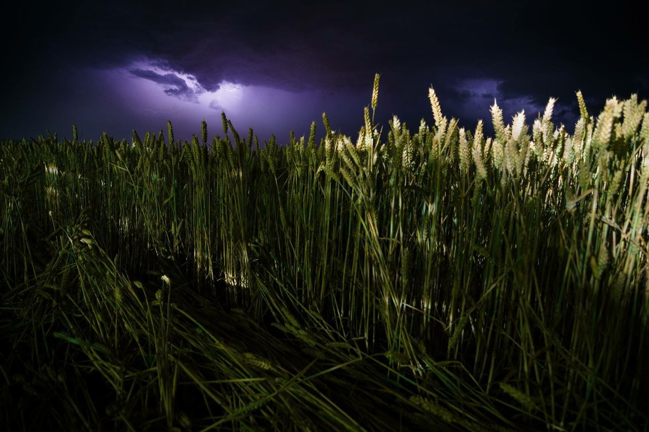 Beautiful stock photos of lightning, Cereal Plant, Cloud - Sky, Cloudy, Crop