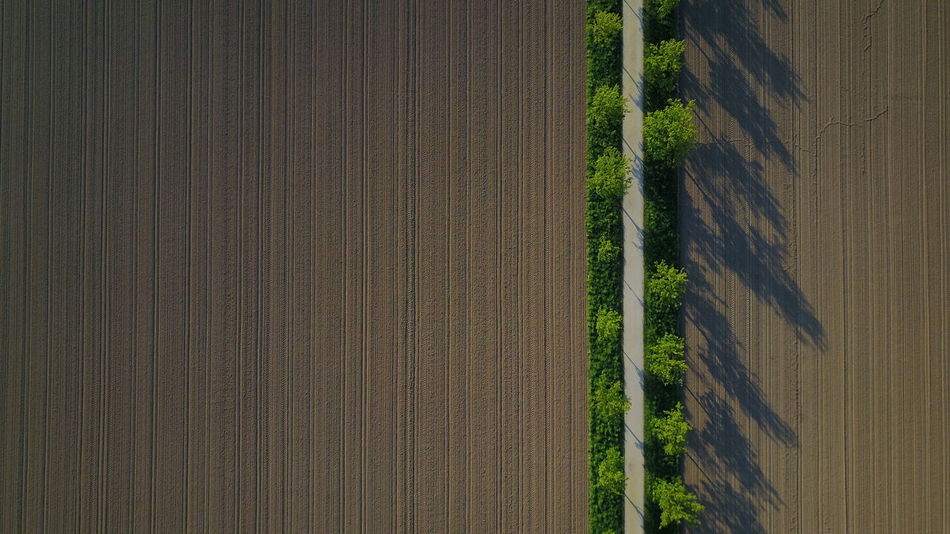 Agriculture Beauty In Nature Day Field Growth Landscape Nature No People Outdoors Plough Rural Scene Tranquil Scene Tranquility Tree Aircraft Aerial View Aerial Shot Aerialphotography