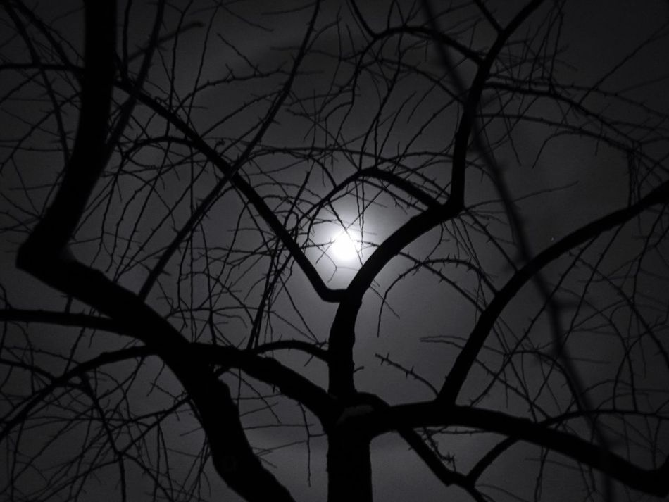 Moon Moonlight Moon Ring Lilly Among Clouds Long Distance Relationship Winter2016 ❄ Tree Moon Shots
