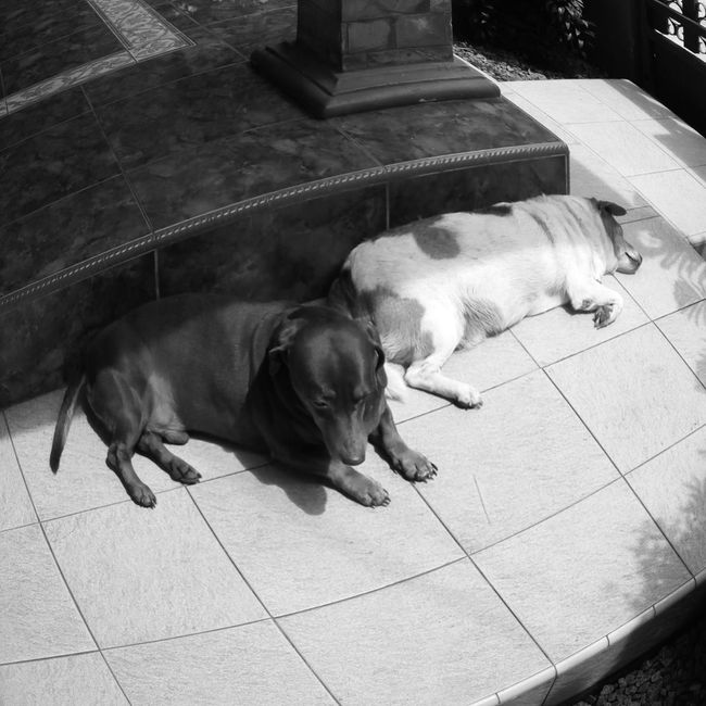 The dogs on sunday! Check This Out Enjoying Life Relaxing Found On The Roll Dogslife EyeEm Bnw Blackandwhite