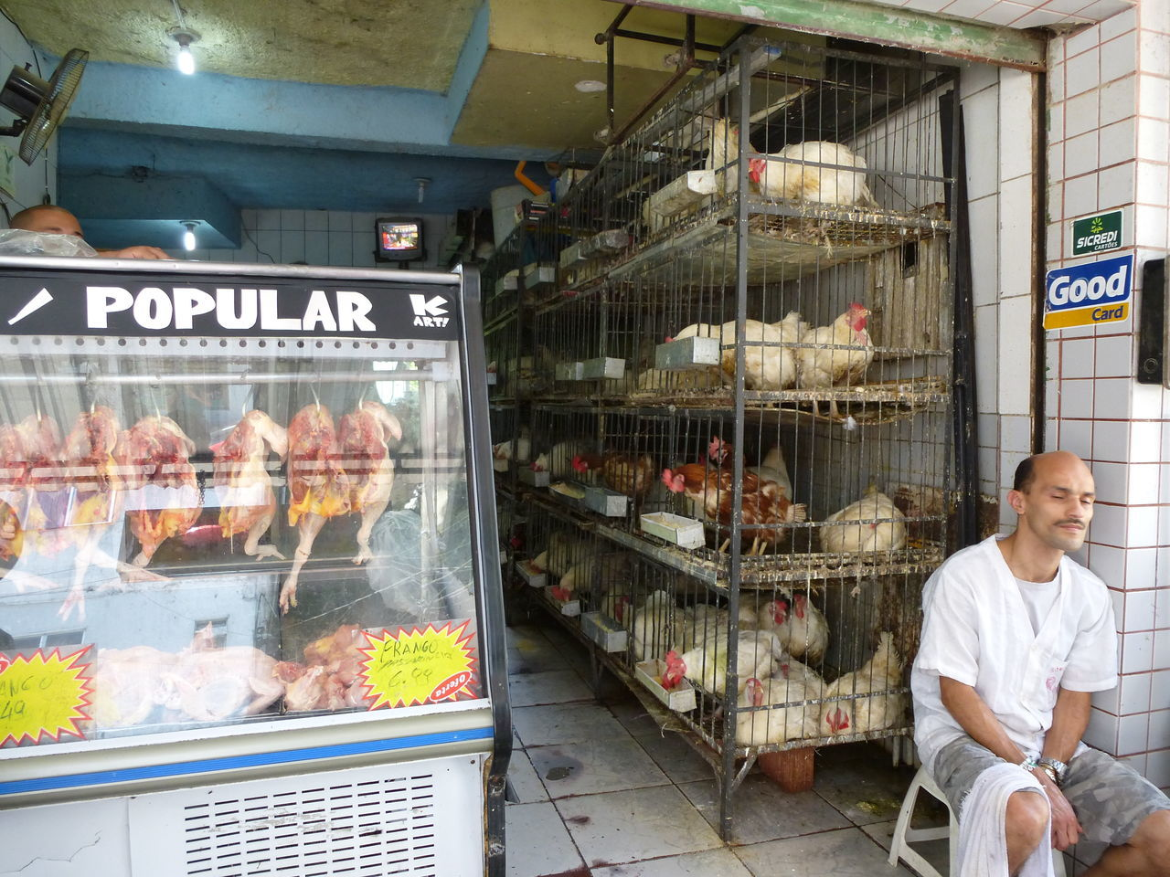 Business Butchery Chicken Chicken - Bird Chicken Shopping Favela Rocinha Life Is A Beach Live And Dead Meat! Meat! Meat! Occupation Poltry Store