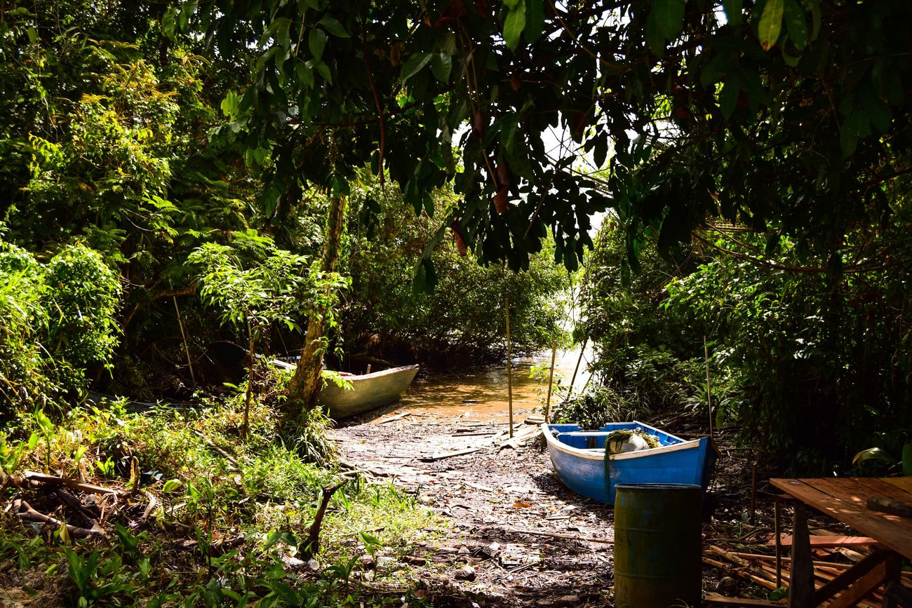 Guyana Fort Zeelander. Tree Growth Nature Green Color No People Plant Day Outdoors Beauty In Nature Scenics Guyana Guyana Area Guyana Esquibo River Guyana, Amerindian Community, GuyaneseStyle Boats And Water Boats And Moorings Boat Building Beautiful Nature