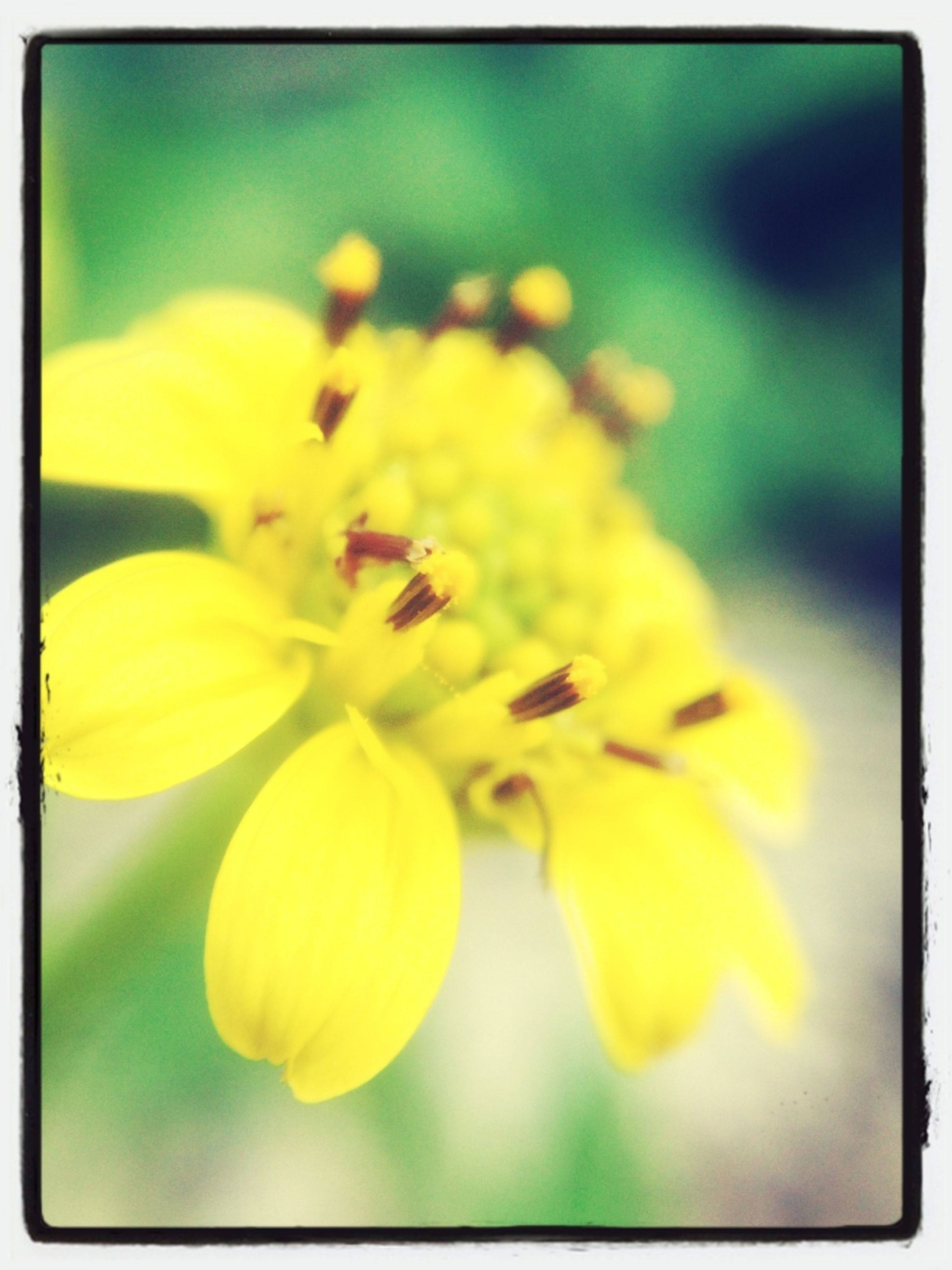 flower, freshness, petal, yellow, fragility, flower head, transfer print, growth, beauty in nature, close-up, focus on foreground, nature, auto post production filter, blooming, pollen, selective focus, in bloom, blossom, plant, stamen