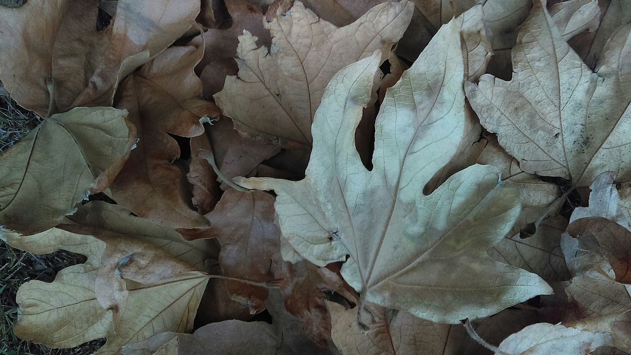 Close-Up Of Fallen Dry Leaves On Field