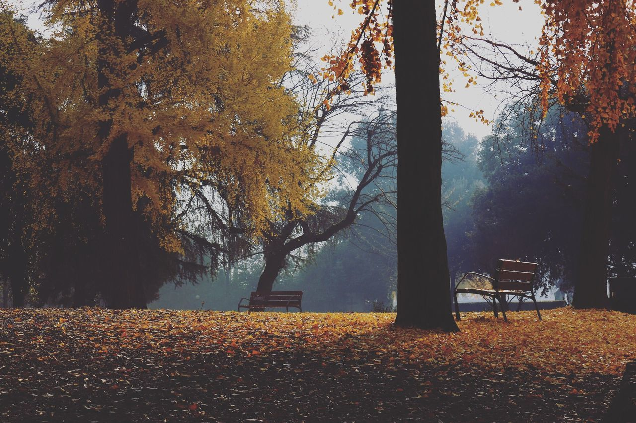 Beautiful stock photos of fall,  Autumn,  Beauty In Nature,  Day,  Growth