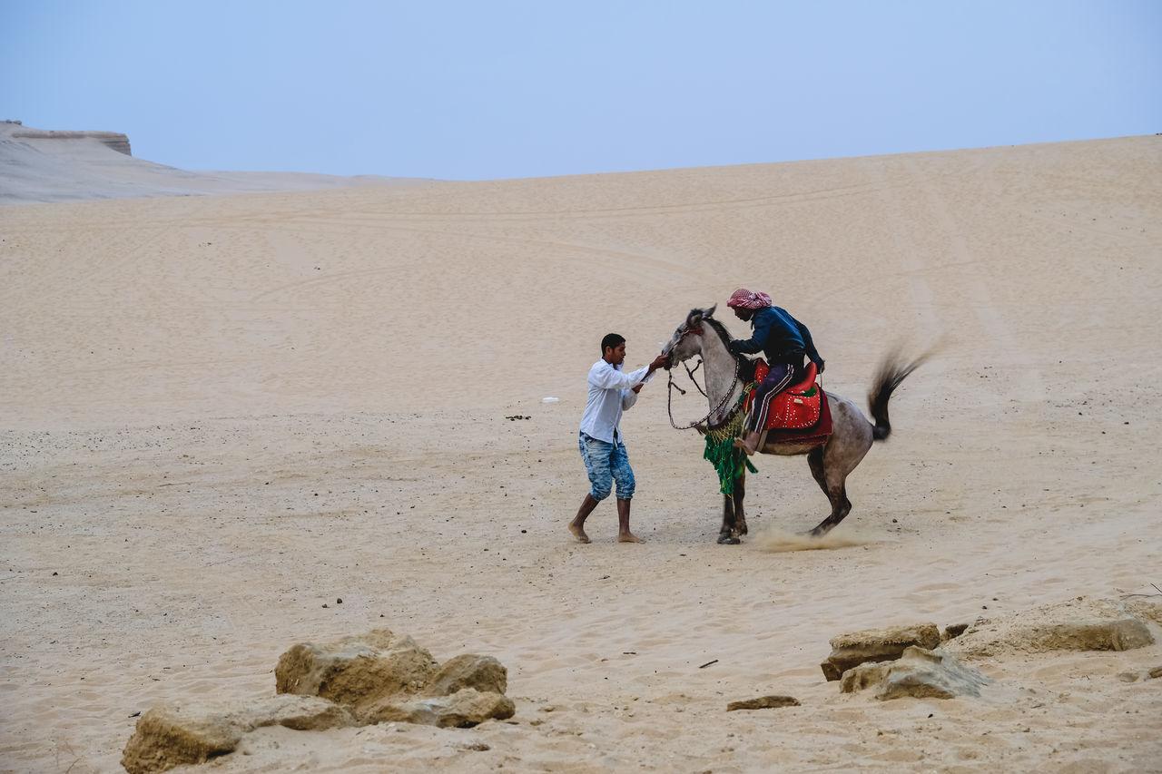 Arabian Horse Desert Horse Sand WADI El-Rayan, Fayoum, Egypt BYOPaper! Live For The Story The Great Outdoors - 2017 EyeEm Awards The Street Photographer - 2017 EyeEm Awards