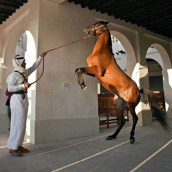 Horse <3 Arabian Horse Arabian Building One Person Beautiful Culture Men Jazirah Arabs Dessert Arab Arabic Style Arabic Middle East Only Men Arts Culture And Entertainment History Cultures Dome Travel Destinations