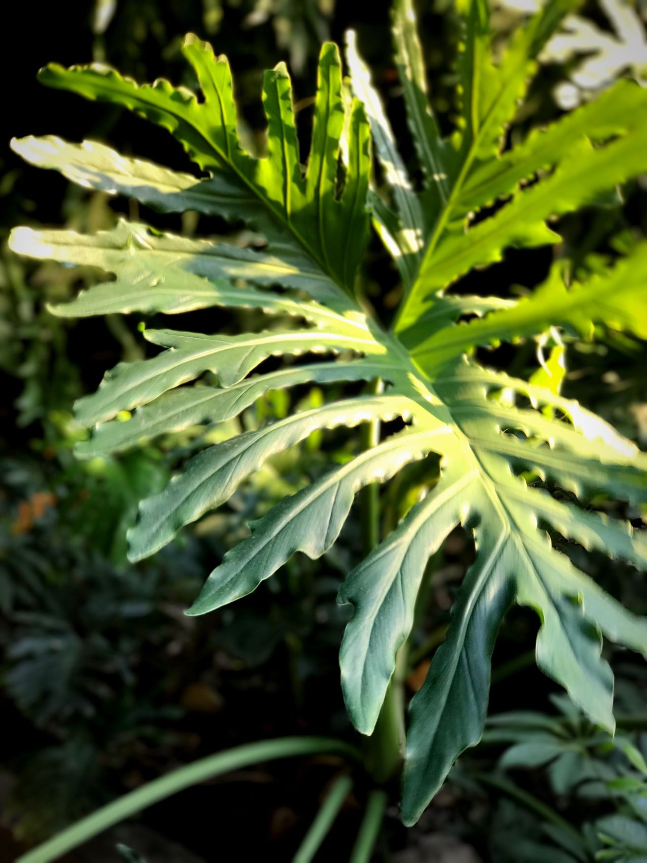 Green Plant Green Leaves Green Leaf Growth Leaf Plant Nature Green Color No People Close-up Outdoors Day Freshness