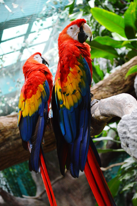 Macaws Macaw Red Macawsofinstagram Macaws On A Log Macaw Flower Macaw Parrot A Bird's Eye View Birds Bird Photography Birds_collection Bird On A Log Birds In Flight Birds In Station