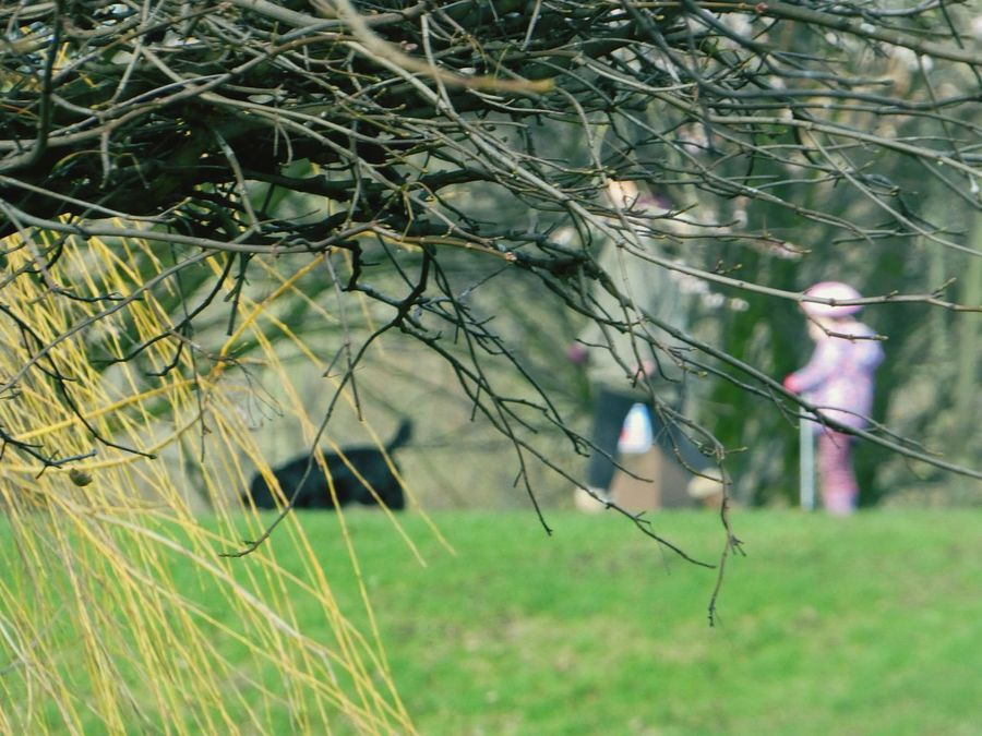 Sometimes it's nice to blur life a little...or become invisible... Blurred Life Life Blur Blurred Background Focus On Foreground Being Invisible Invisiblephotographer Hidden From View Shrubs One Woman Child In Pink Blurred Black Dog Interesting Point Of View Branch