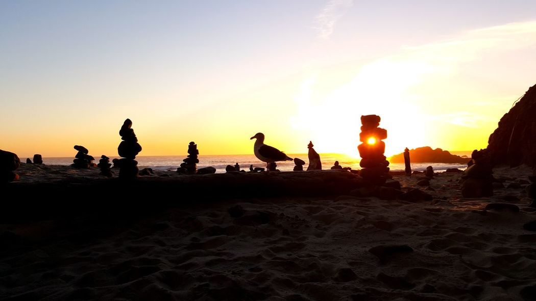 I don't even want to admit how long it took me to get this seagull to stand on that log. Beach Beauty In Nature Bird Nature No People Outdoors Pacific Ocean Rock Carin Sand Scenics Sea Seagull Silhouette Sky Sunset Sunset On The Beach Water Wildlife