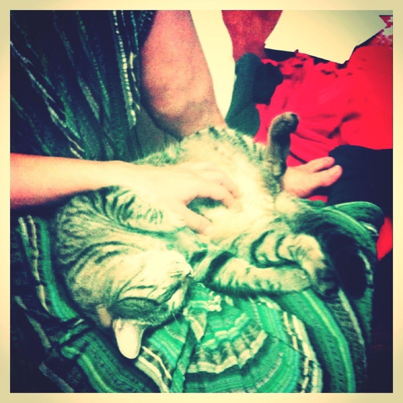 Tigercat Cuddling