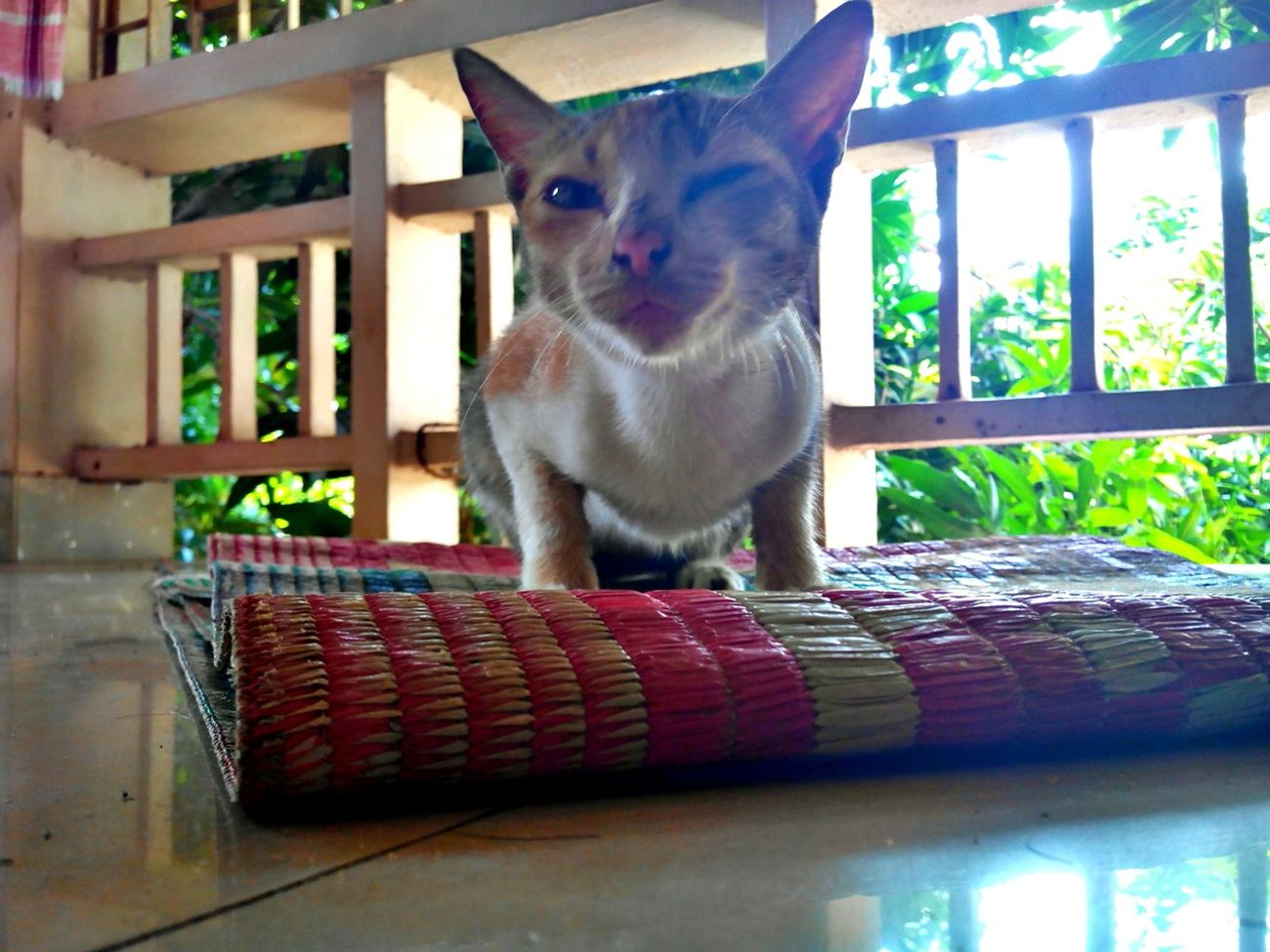 Tara is back, this cat really knows how to pose for a snap :) Mobilephotography Hello World Cat Wink Animal Portrait