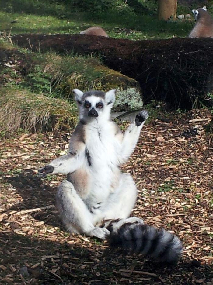 Time to sunbathe! Taking Photos Streamzoofamily StreamzooVille Animals