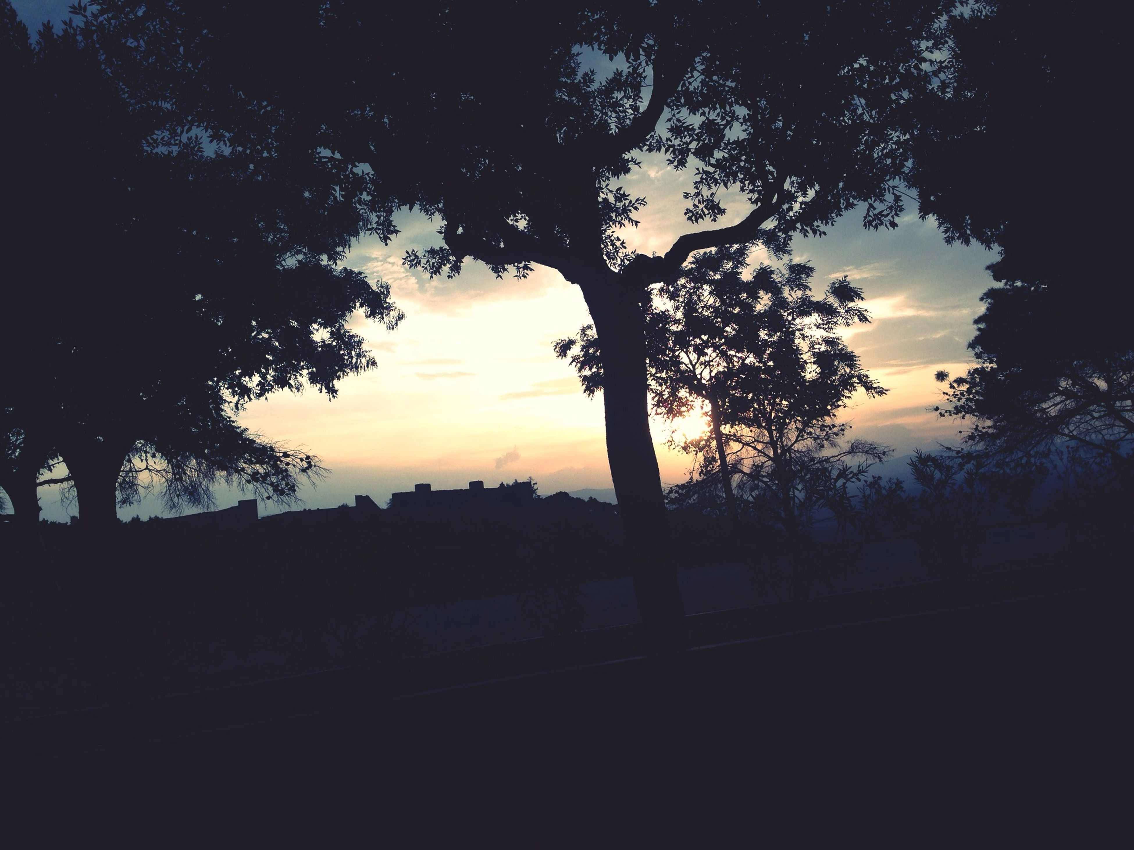 silhouette, sunset, tree, tranquility, sky, tranquil scene, scenics, beauty in nature, nature, dark, outline, idyllic, orange color, landscape, branch, growth, cloud - sky, no people, sun, outdoors