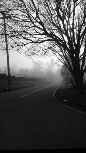 You don't always know which path you're taking Unkown Eerie Beautiful Wintertime Foggy Morning From My Point Of View Creative Light And Shadow Silhouette Cloudy Minds....