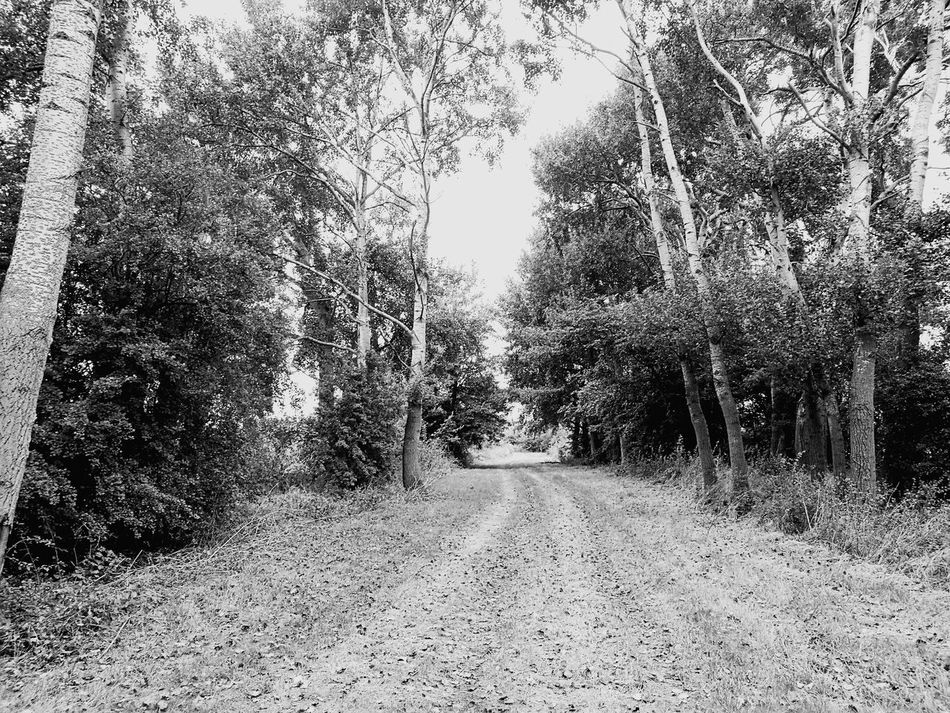 Off roading Tree The Way Forward Tranquil Scene Tranquility Long Non-urban Scene Tree Trunk Scenics Growth Diminishing Perspective Nature Beauty In Nature Dirt Road Treelined Empty Road Narrow Surface Level Day Vanishing Point Solitude My Year My View