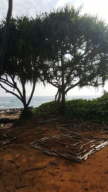 Tree Nature Beach No People Beauty In Nature Lydgate Beach Kauai Life