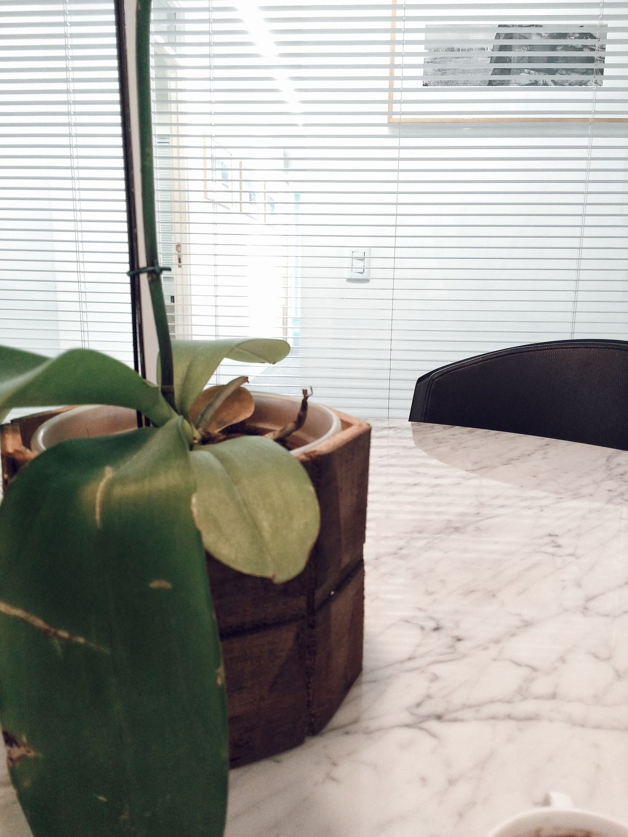 An artificial plant in an office. Indoors  Window Home Interior Day Close-up Artificial Plant Artificial Flower White Minimalistic Office Work Job Blinds Working Environment Clean Room Decor Decoration Light Close Up Table Desk Glass Marble Reflection