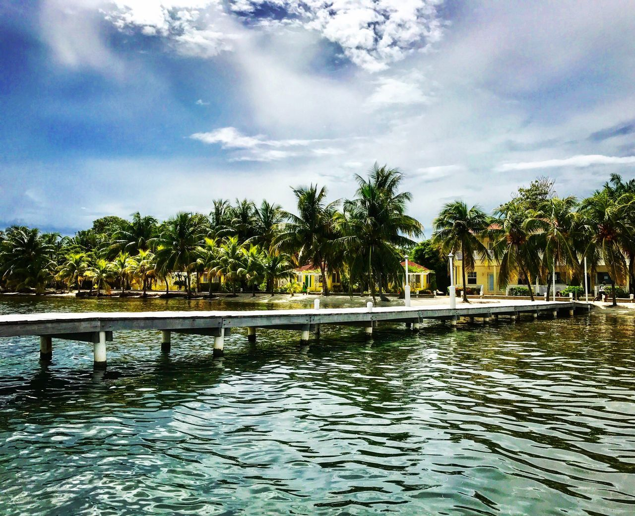 water, palm tree, swimming pool, tree, sky, waterfront, nature, tranquility, outdoors, beauty in nature, no people, day