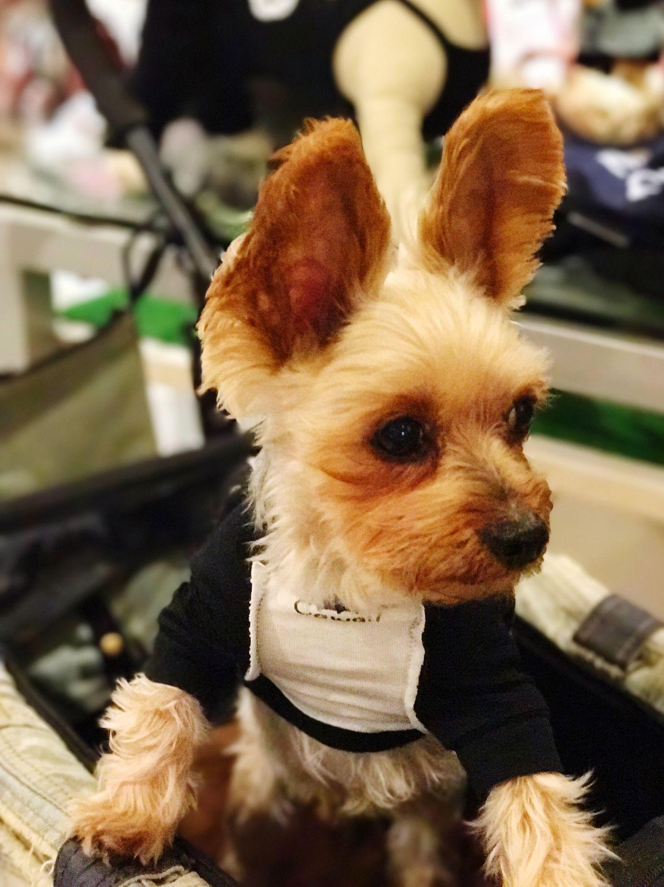 IPhone7Plus Dog Indoors  Close-up