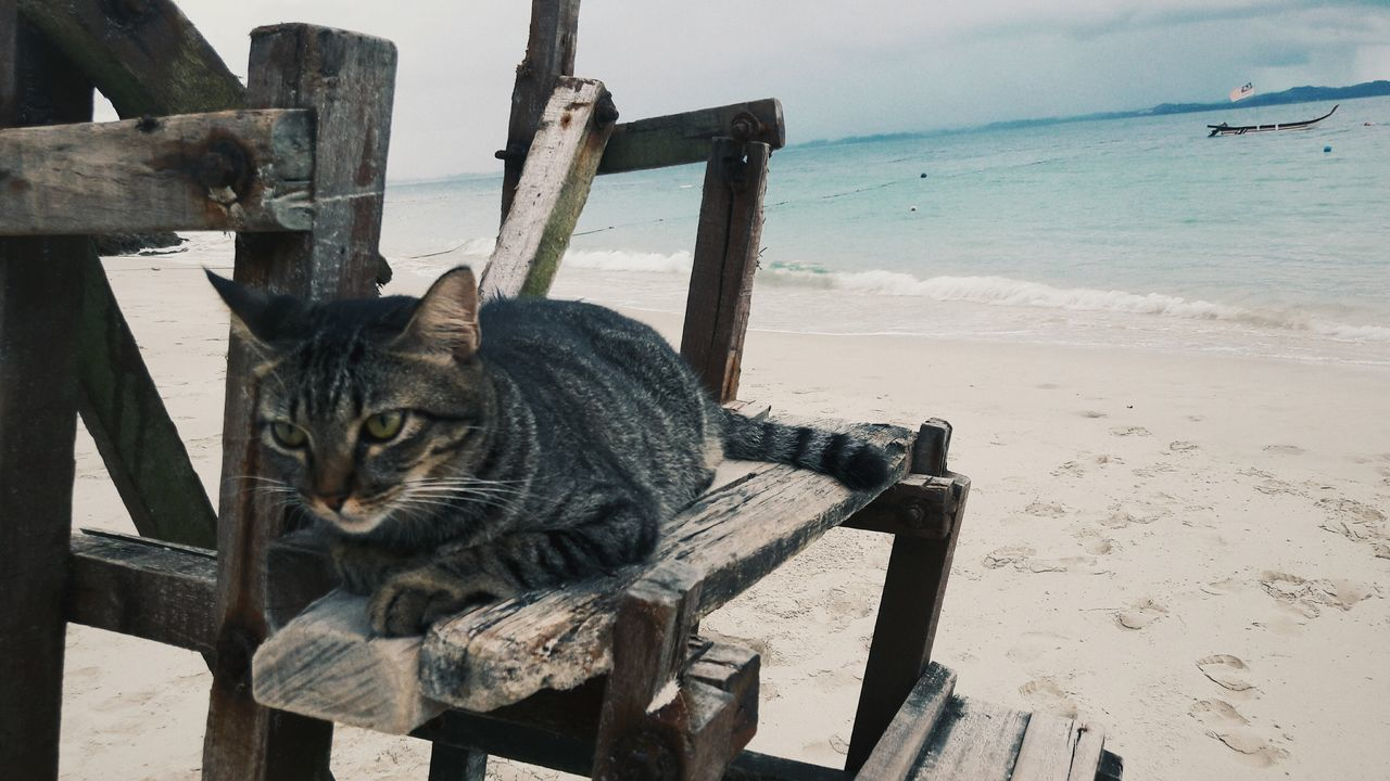 One Animal Pets Sea Animal Themes No People Cat Cats Of EyeEm Cat Watching Close Up Cat Beach Cat Lovers Cat Island Cat Watching Me Cat Is Waiting Lying Down Water Outdoors Domestic Cat Home Sweet Home Tranquility Island Kapas Nature Malaysia
