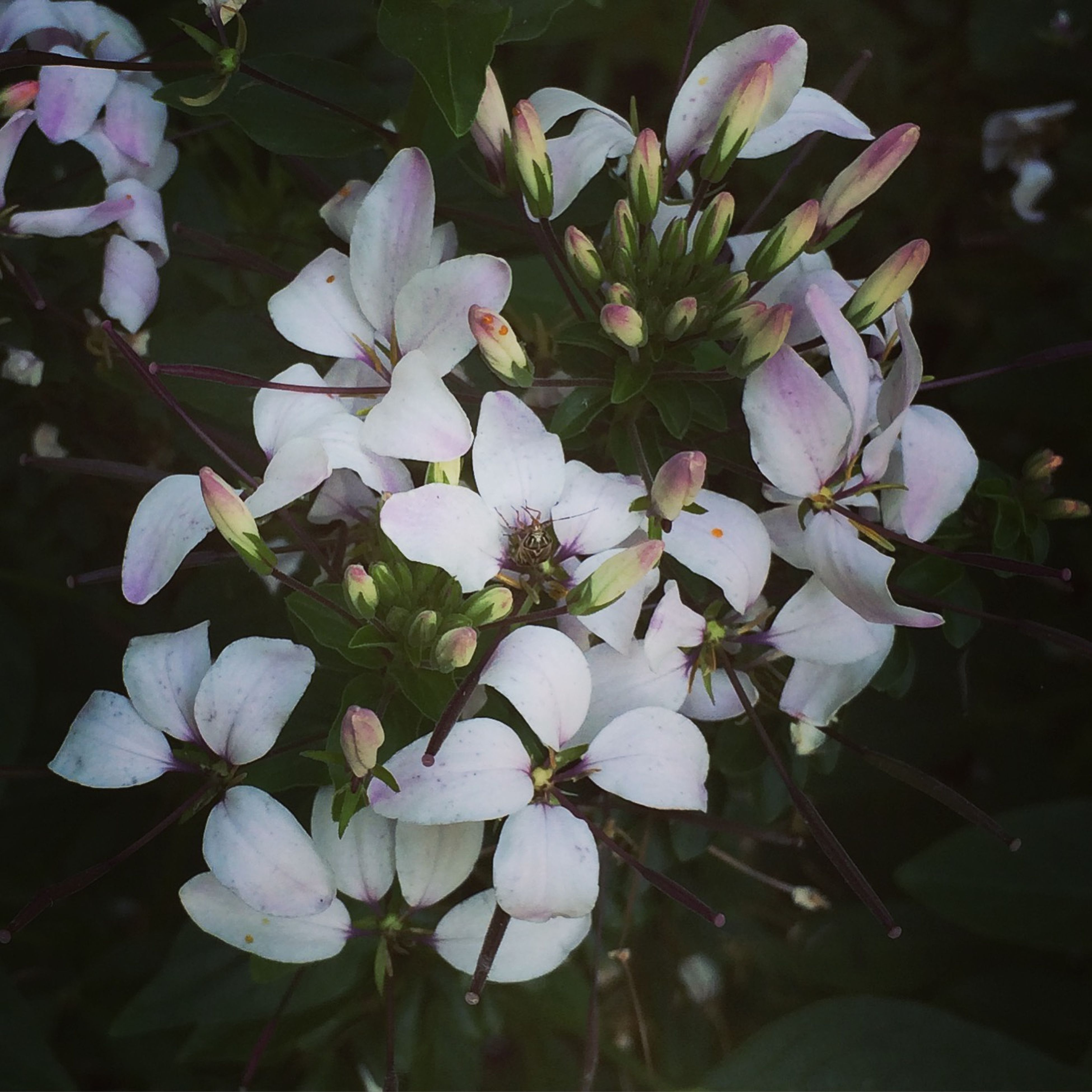 flower, growth, freshness, fragility, petal, beauty in nature, nature, plant, blooming, close-up, flower head, white color, focus on foreground, leaf, in bloom, park - man made space, outdoors, day, high angle view, no people