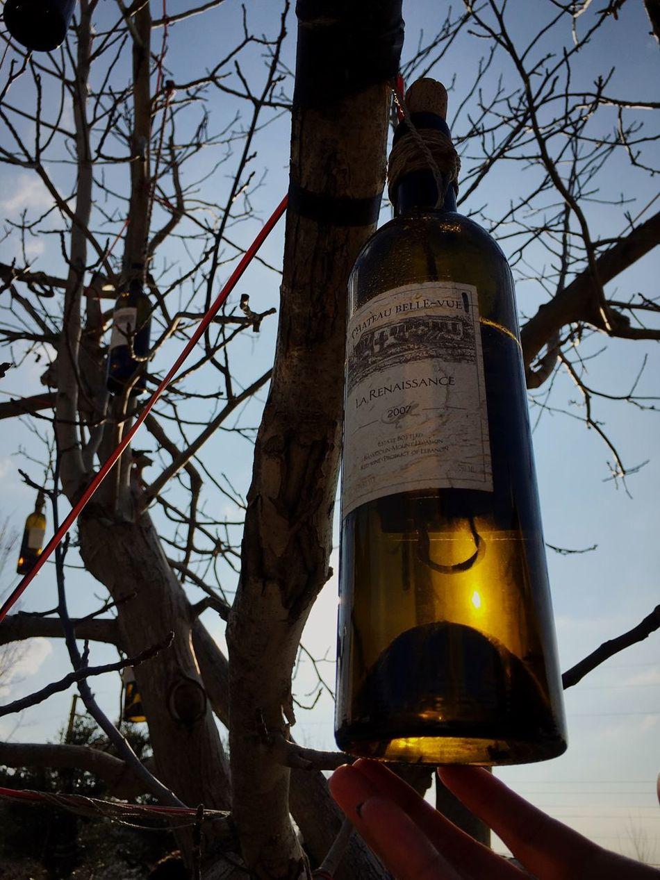 Wine Wine Tasting Winery Winebottles Sun Warm Tree Hanging Hangingfromtrees Checkthisout Lebanon LiveLoveLebanon ShotoniPhone6s