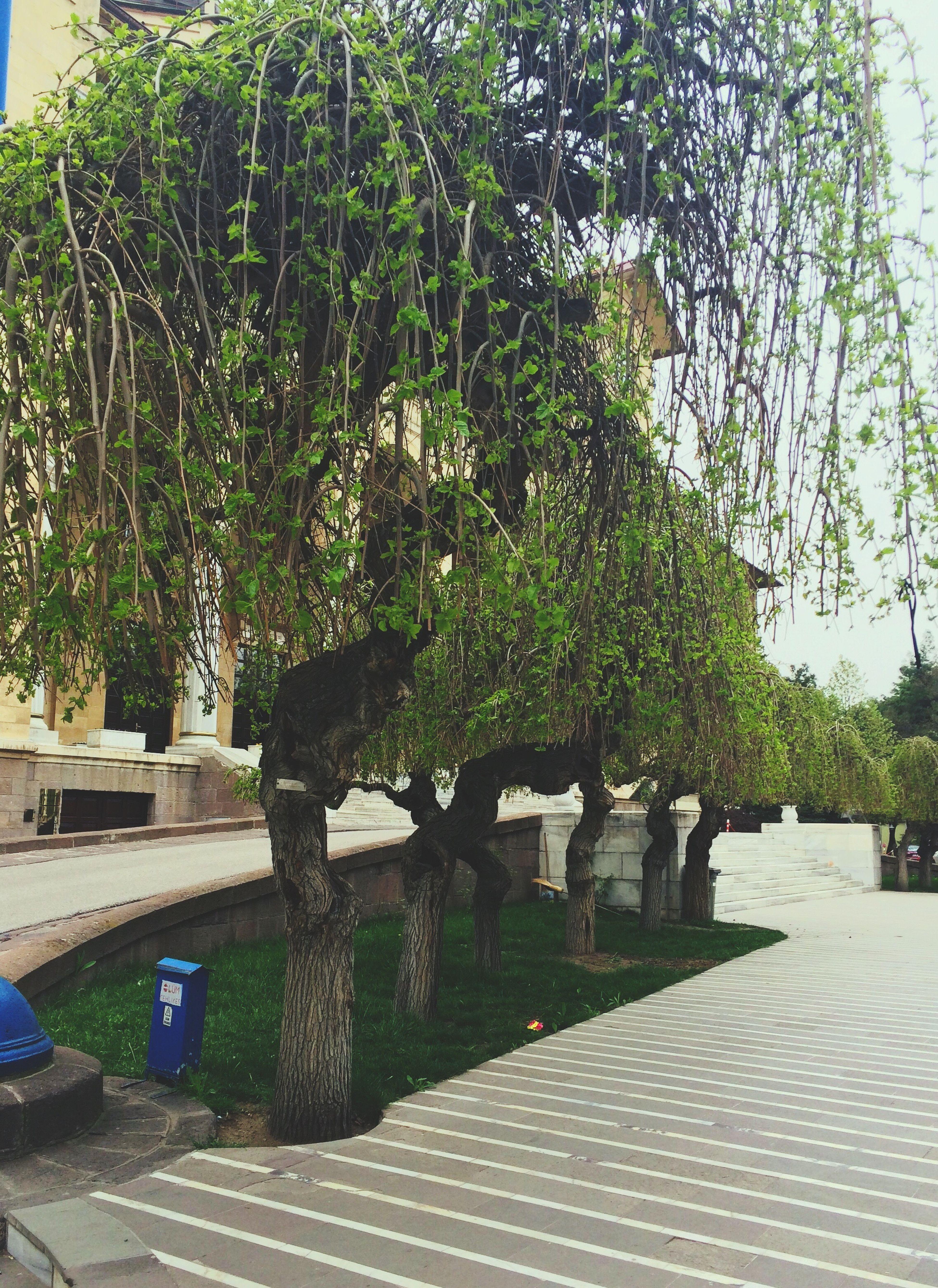 Yesilisevdogayikoru Campus University Dogadan Sky Nature Photography Hello World Terskaradut