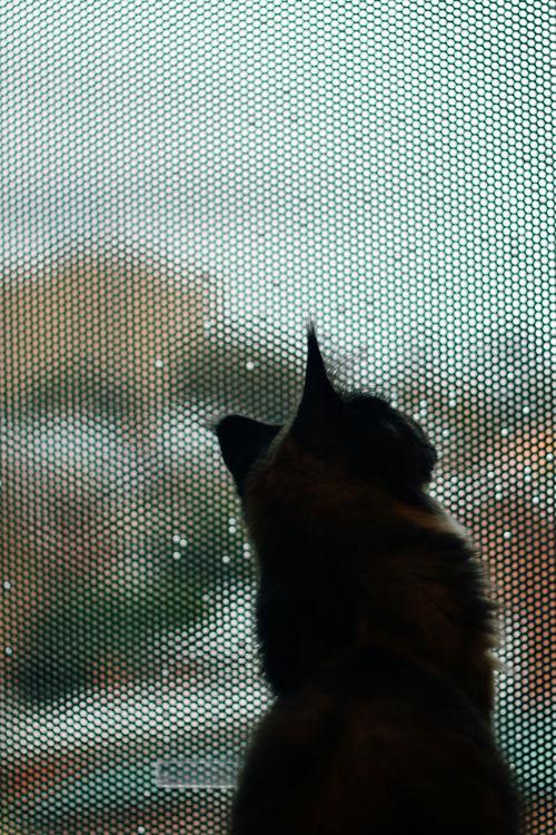 rain window   EyeEm