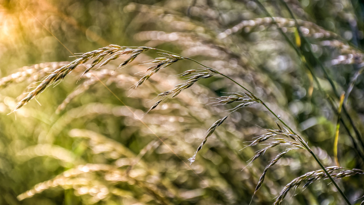 Grass, Bokeh And A Litle Beam Of Sunlight Beauty In Nature Close-up Day EyeEmNewHere Lightrays Nature No People Outdoors Plant Sunbeam