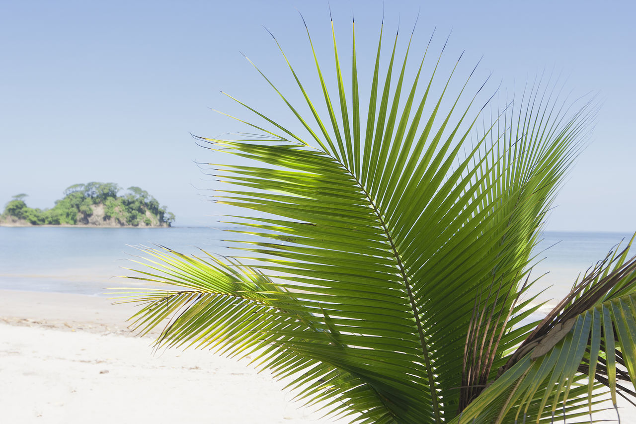 Palm Tree at beach in Costa Rica - Punta Leona, Puntarenas province, Central Pacific Coast, Costa Rica Beach Beauty In Nature Close-up Coconut Palm Tree Costa Rica Environment Frond Growth Nature No People Pacific Ocean Palm Palm Frond Palm Leaf Palm Tree Punta Leona Puntarenas Relax Sea Tourism Travel Destinations Tropical Tropical Climate Vacations Water