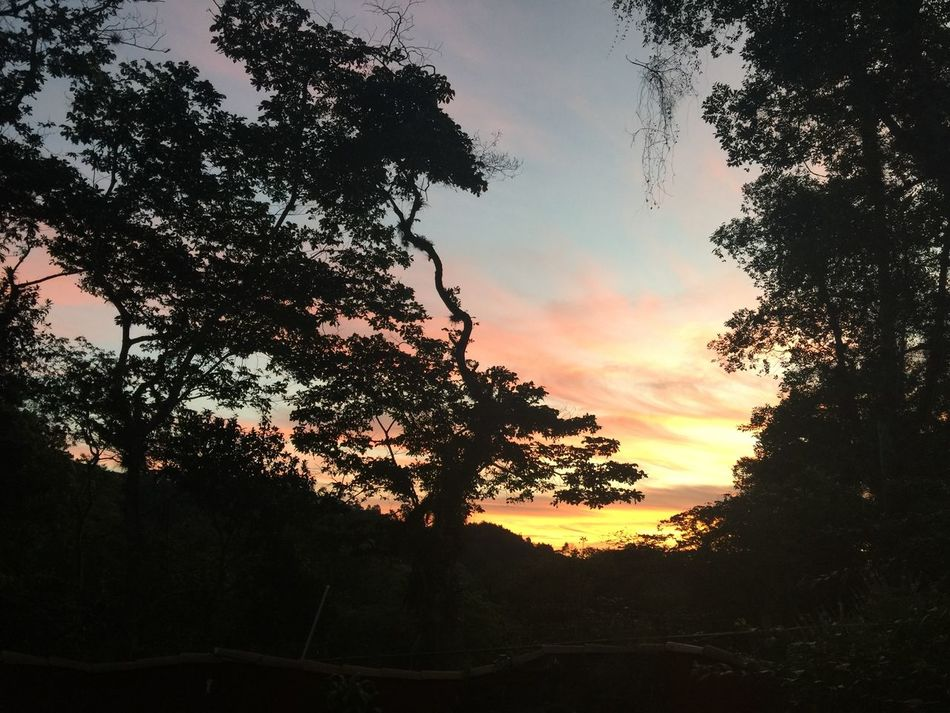 #birds #coatepec #colours #mexico #sky #sunrise #reflection #sunset #sun #clouds #skylovers #sky #nature #beautifulinnature #naturalbeauty #photography #landscape #tree #veracruz Amanecer