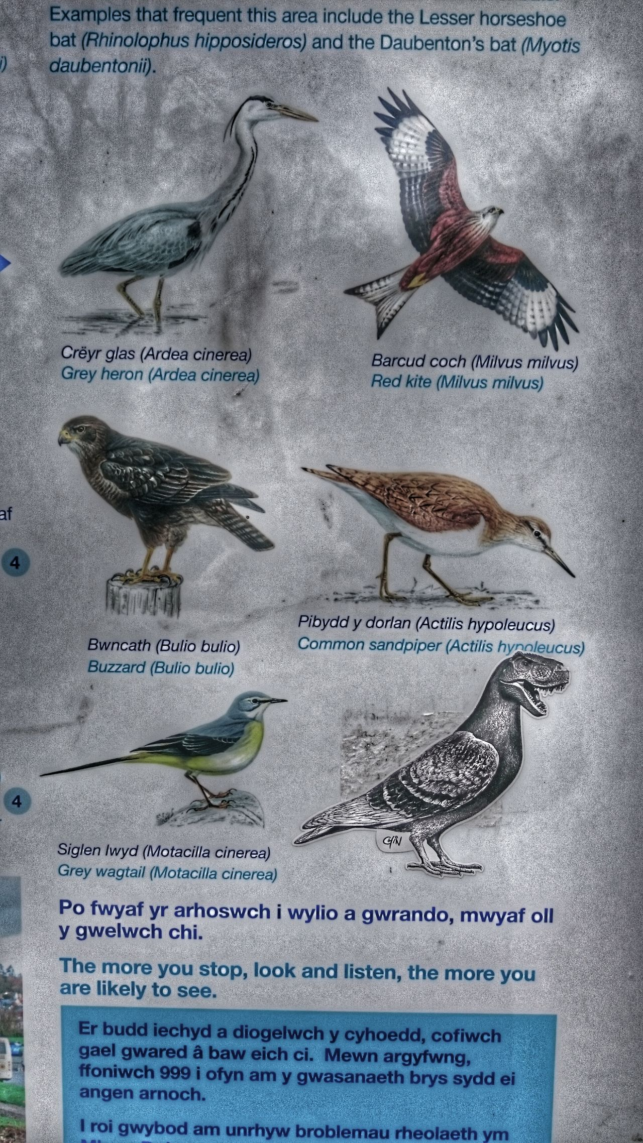 Spot The Odd One Out! Spot The Obvious T-Rex !  Bird Guide Just For Laughs:-) Hope I Dont Find One Ha Ha Ha Ha