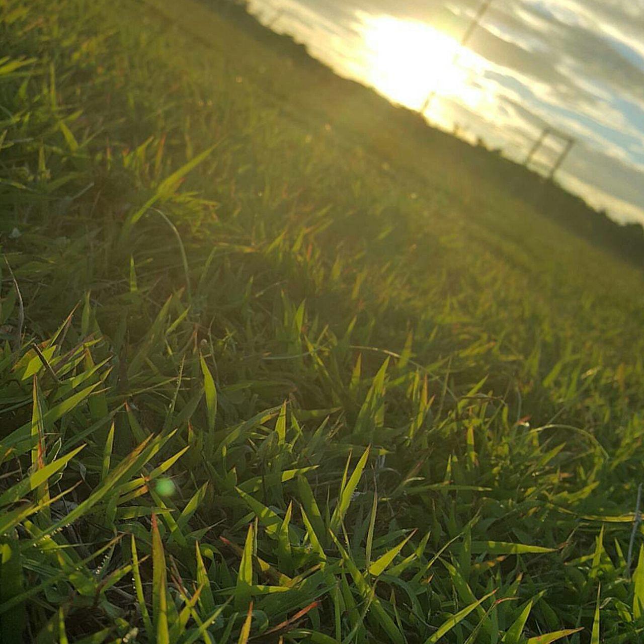Sun Glare Grass Green Field