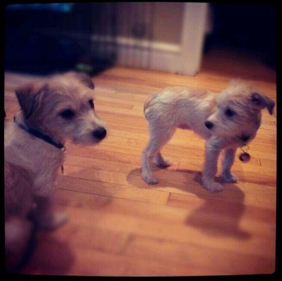 My pups A'va and Neo.