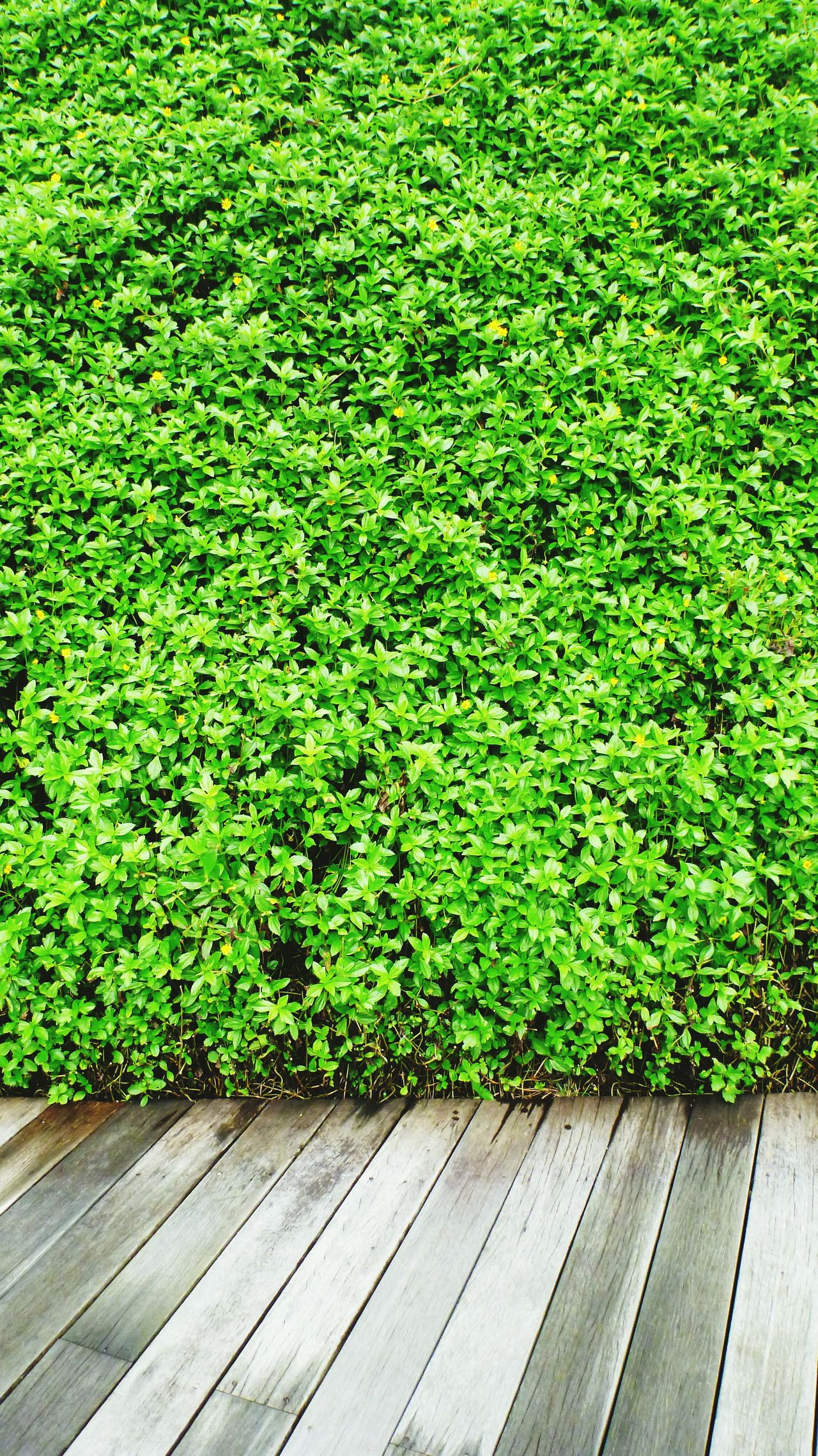 Green Wall Freshness Greenery Protecting Where We Play EyeEm Nature Lover EyeEm Gallery Textures And Surfaces EyeEm Best Shots Getting Inspired Taking Photos