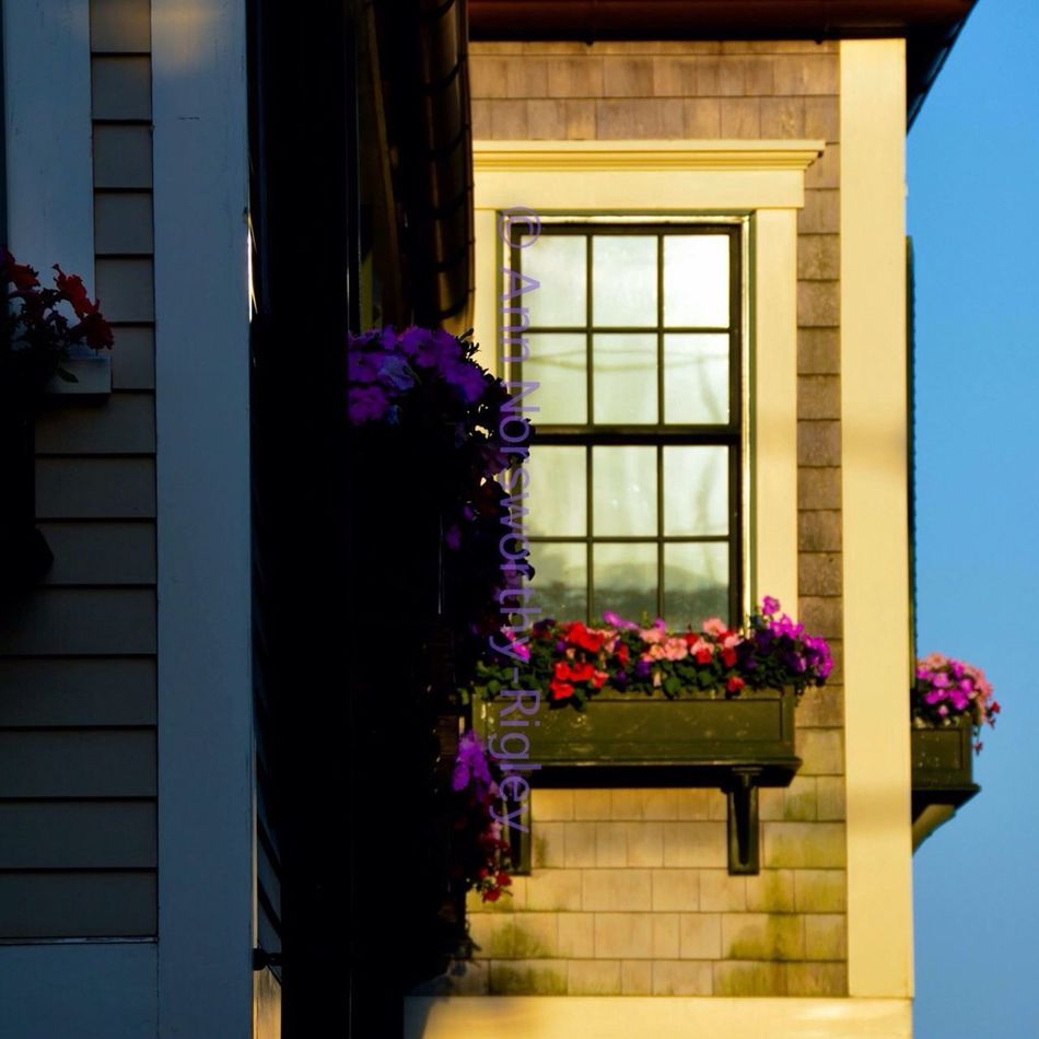 "©Ann Norsworthy Rigley ""Window Box"" Windows Windowbox Gentrification Light And Shadow IoLIGHTstudios"