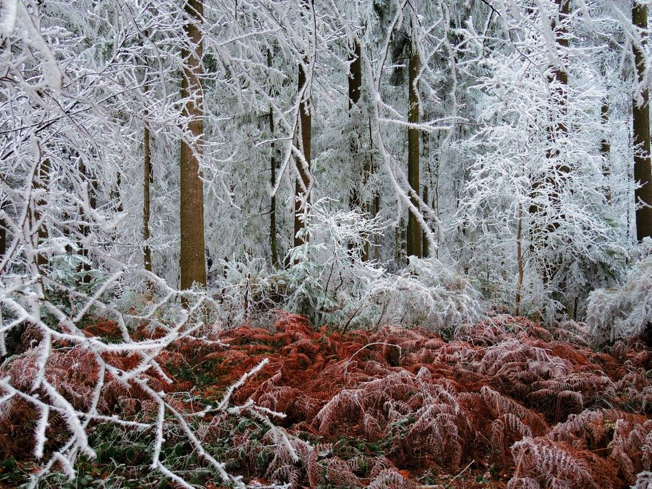 Frozen Nature Tree Tree Trunk Forest Growth Tranquility Beauty In Nature Winter No People Cold Temperature Outdoors Day Branch Close-up